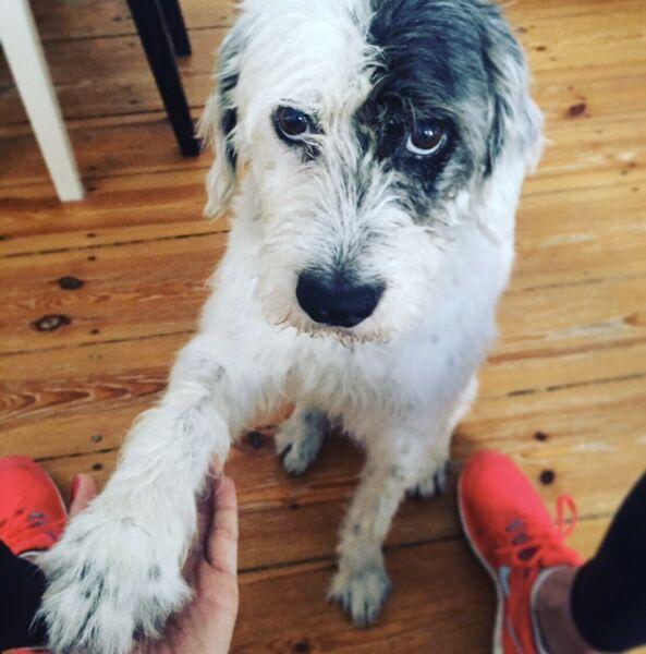 Mein Hund Lasse Ist Eine Wundervolle Person Die Mich Seit 12