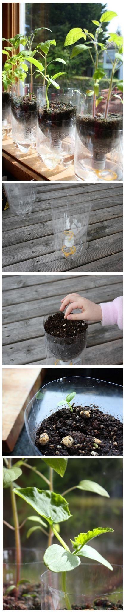 Self-Watering Seed Starter Pots – Tutorial