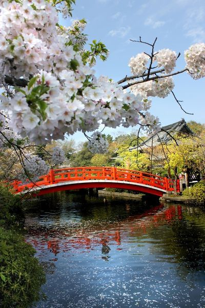Japanese Garden Cherry Blossom Bridge 177 best japanese garden images on pinterest | japanese gardens