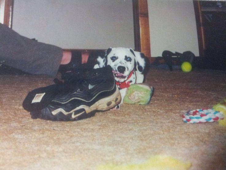 Licking dad's shoe