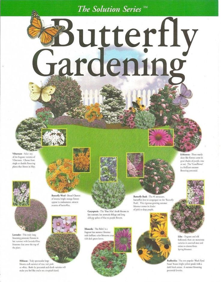 Create Your Own Butterfly Garden Backyard, ideas, garden, diy, bbq, hammock, pation, outdoor, deck, yard, grill, party, pergola, fire pit, bonfire, terrace, lighting, playground, landscape, playyard, decration, house, pit, design, fireplace, tutorials, crative, flower, how to, cottages.