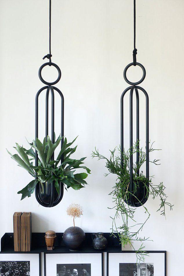 249 besten houseplants bilder auf pinterest gr npflanzen zimmerpflanzen und indoor garten - Zimmerpflanzen berlin ...
