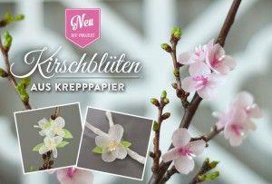 DIY: Kirschblüten aus Krepppapier für hübsche Frühlingsdekos selber machen. Tutorial, Vorlage und Materialliste findet Ihr hier: https://www.deko-kitchen.de/diy-huebsche-kirschblueten-aus-kreppapier-bluehen-das-ganze-jahr/