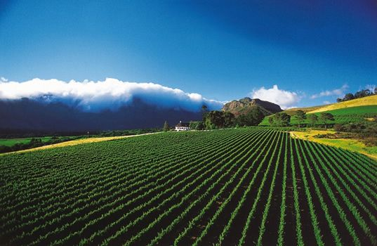 Cape Town - wine route.  South Africa