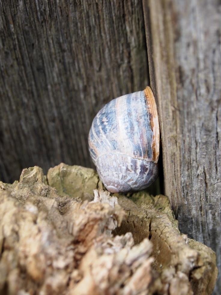 Snail hiding in barrel
