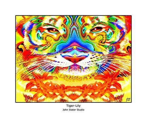 Tiger-Lily © John Slater Studio