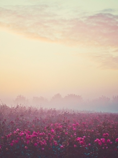 .Breath Fog, Parties Monsters, Breathtaking Beautiful, Misty Meadow, Foggy Mornings, Pink Meadow, Clouds Sunrises, Beautiful Pink, Misty Mornings