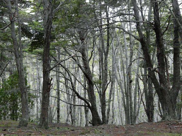 Taiga o Bosque frió Bosque magallánico, América del Sur, Chile. Sus principales catástrofes son los derrames d petróleo y los cambios e temperatura.
