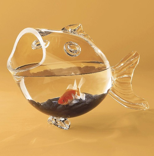 17 best old household items new fish tank ideas images on for Fish bowl pets