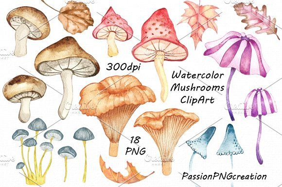 Watercolor mushrooms clipart by PassionPNGcreation on @creativemarket