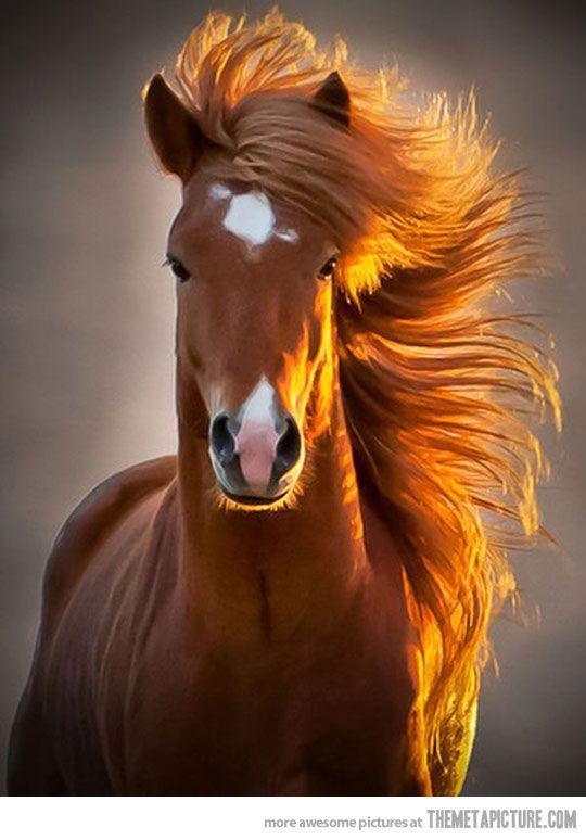 Beatiful Houses Brilliant 60 Best Horses Images On Pinterest  Horses Beautiful Horses And Inspiration Design