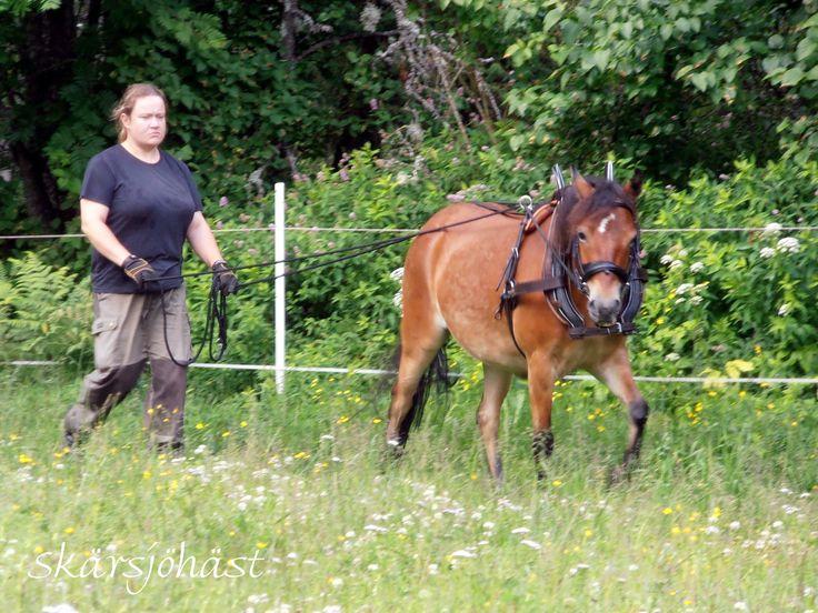 Hästutbildning