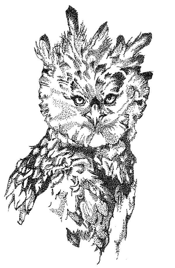 Harpy Eagle Harpy Eagle Coloring Pages