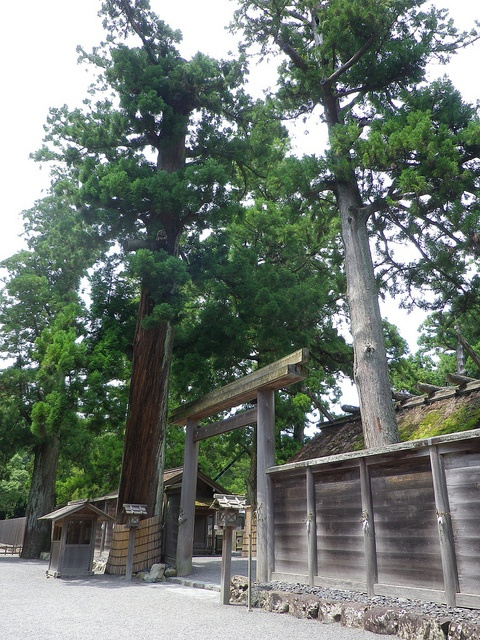 Ise Grand Shrine #japan #mie**.