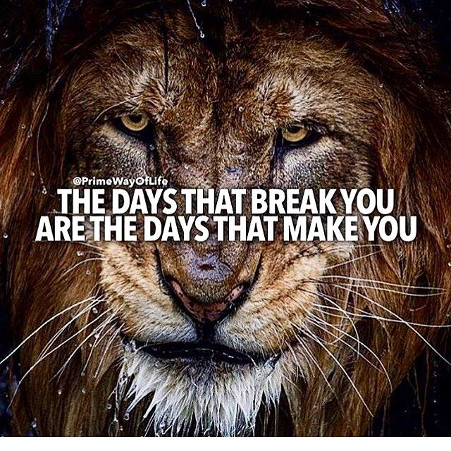 Motivational Quotes With Lion Images: Best 25+ Mindset Quotes Ideas On Pinterest
