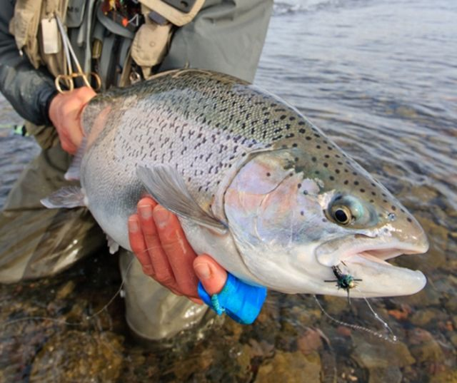 17 best images about winter fishing on pinterest summer for Winter trout fishing