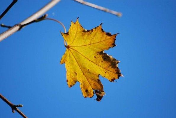 Рассказ про осенние листья