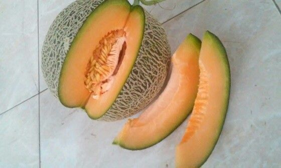 Dainty Melon