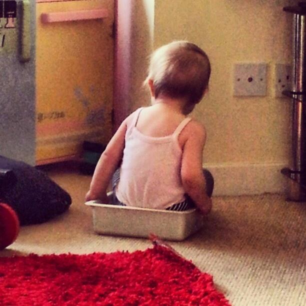 Poppy in a tub