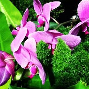 beautiful #flowers