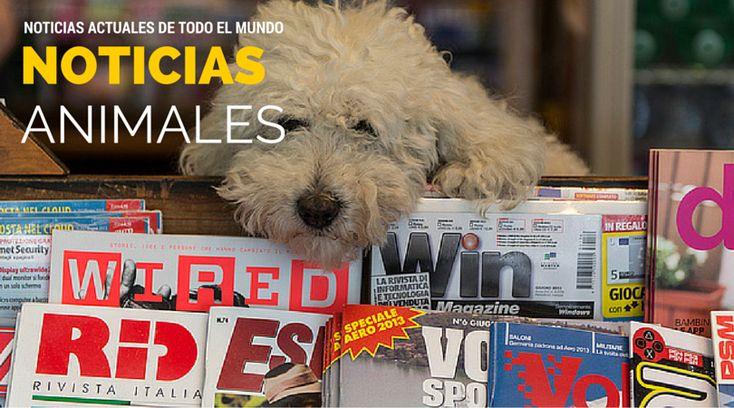 Noticias Animales de actualidad, Perros, Gatos, Derechos Animales, Leyes, Castigo al Maltrato Animal y buenas noticias en general de mundo animal