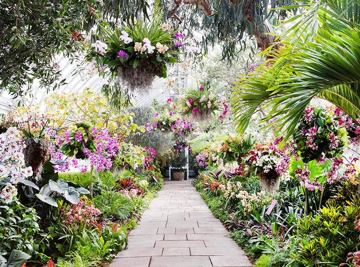 Go Inside The Orchid Show At The New York Botanical Garden