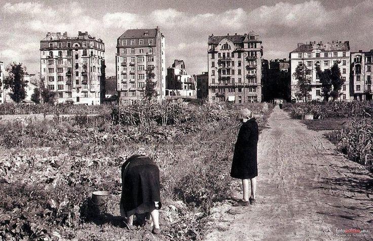 Pola uprawne na ul. Polnej, tuż po II wojnie.  żródło fot. fotopolska.eu https://www.facebook.com/361392044037992/photo