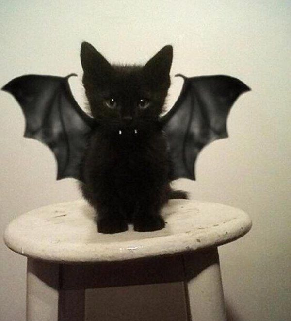50 Best Pet Costumes via BuzzFeed   Vampire Kitten   The 50 Absolute Best Animal Costumes Of All Time