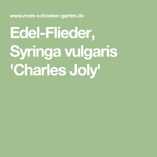 Edel-Flieder, Syringa vulgaris 'Charles Joly'