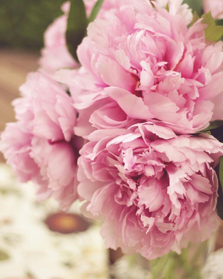 🎀 #sundayfunday #peonies #peonylove #spring  #springishere #blossom #nature #naturelover #naturephotography #naturelovers #naturegram #followforfollow #like4like #follow4follow #likeforlike #vsco #vscocam #mik #instadaily #instagood  #photoofday #photography #flowers #flowerpower #topnature #topnaturephoto  #vscohun #vscohungary #ikozosseg #livelifeinfullbloom @topnaturephoto @instagram @vscohun