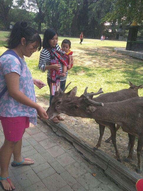 Oh deer ^^