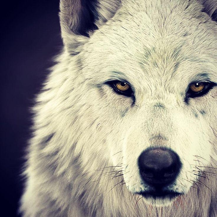 его белый волк фото рычит две перпендикулярные