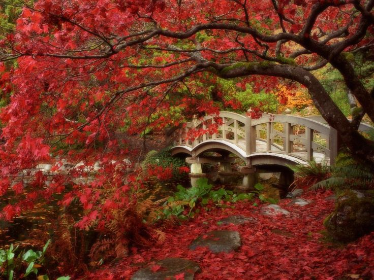 fall pc wallpapers | Fall Photo Autumn Wallpapers Autumn Desktop Pictures