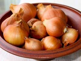 Getting Started with Shallots - the easiest storage onion to grow, and they last for up to a year