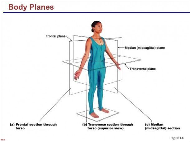 38+ Body regions labeling worksheet Information