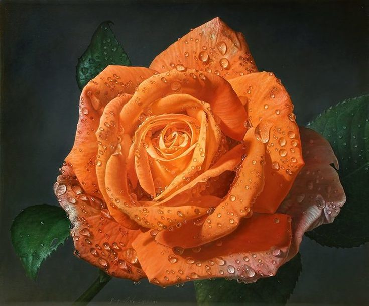 Delicate-hyper-realistic-paintings-of-roses-by-Gioacchino-Passini-07.jpg (740×613)