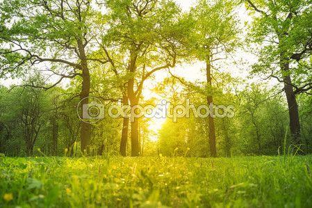 Трава и деревья в парке освещенные солнечным светом с подсветкой — Стоковое фото © iurii_au #101932302