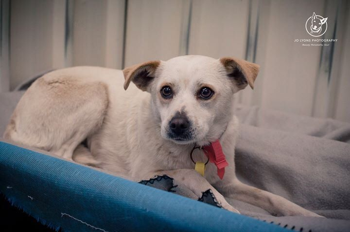 Every week at the pound I have at least one favourite... one that I could easily take home with me if possible. Last Friday it was this little one... she had only just arrived when I met her and she was just laying there watching everything going on aroun