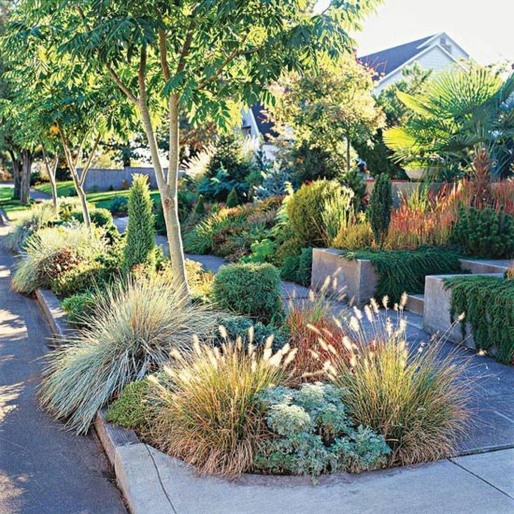 Drought Tolerant Front Yard: 47 Best Drought Tolerant Landscaping Images On Pinterest