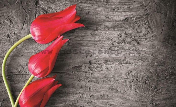 Fototapeta Fototapeta - Červené tulipány   Postershop.cz