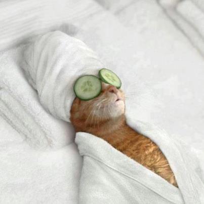 Funny cat beauty treatment