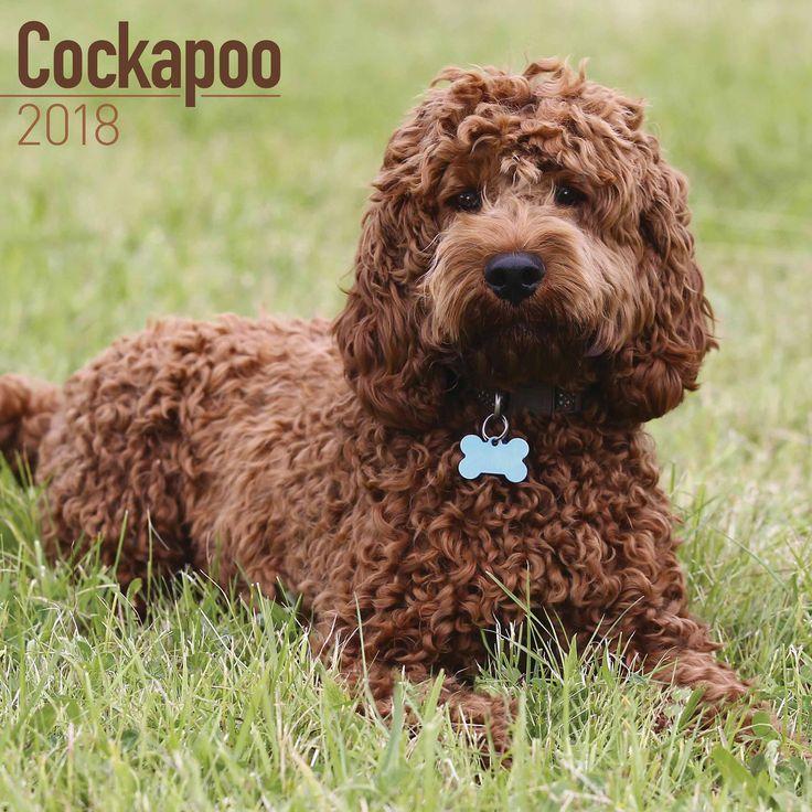 Cockapoo Calendar 2018 Cockapoo, Dog breeds, Breeds