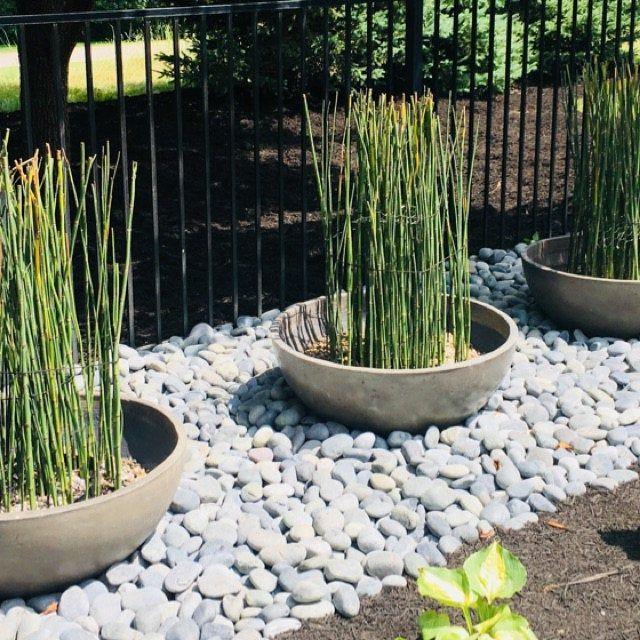 water plants zen garden