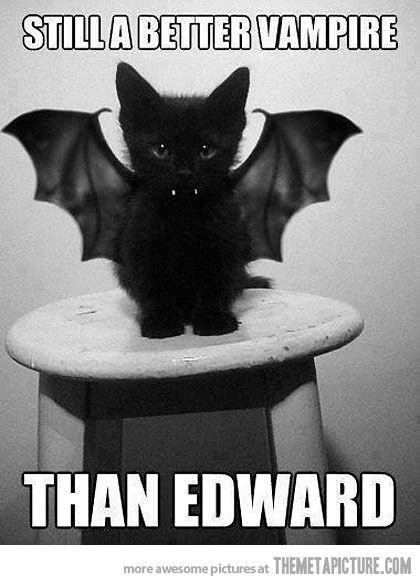 Still a better vampire…: Batcat, Cats, Animals, Kitten, Bats, Pet, Costume, Halloween