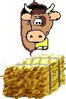 Gifs animés Animaux vaches