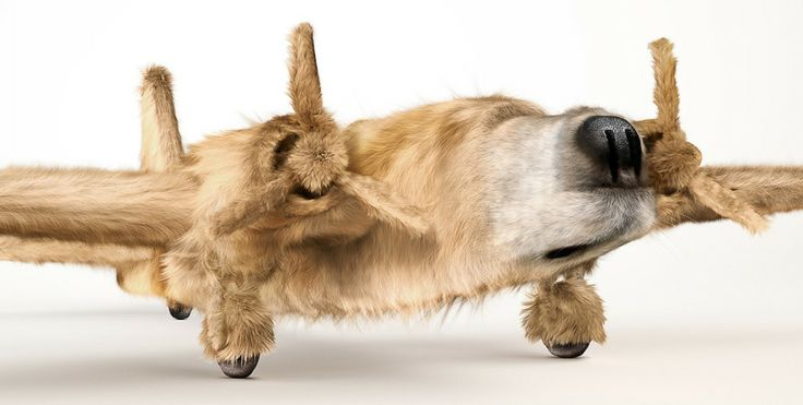 This is very cool!!....Dogfighters: dogs morphed into airplanes by INK