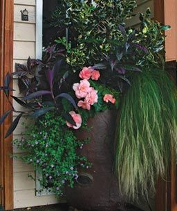 Entryway shade container - begonia, purple heart, trailing spikemoss, bacopa, etc