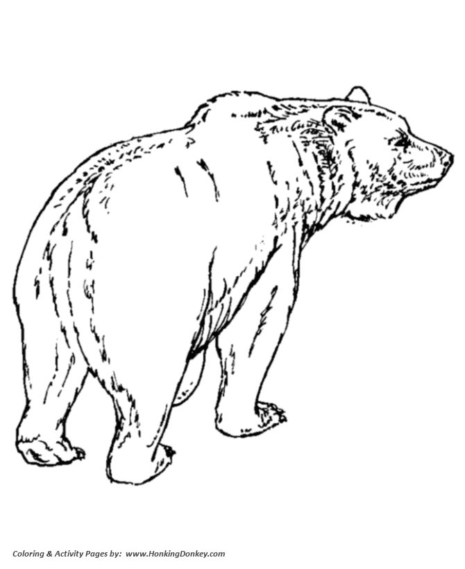 Wild animal coloring page Grizzly Bear walking on all