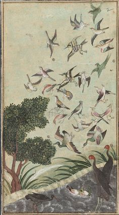 Birds at Baran, possibly from the Babur-nama, late 16th century, Mughal dynasty