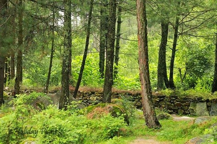 http://planning4holidays.blogspot.in/2015/01/kasol-mini-israel-of-india.html .. Forest in Kasol .. #scenic #valley #parvati #river #untouched #hills #mini #israel #bank #low #population #Himalaya #Sarpass #yanker #pass #Kheerganga #Kasol #Himachal #Pradesh #India #HolidayPlans #Forest